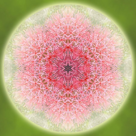 紅花六角形 2